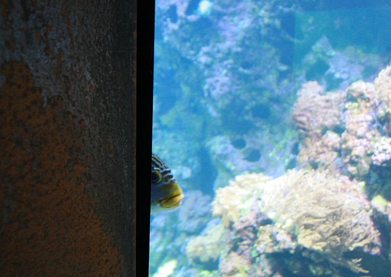 Klimahaus Fisch guckt