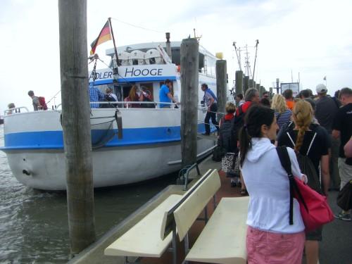 Seeadler im Hafen von Schlüttsiel (c) spinagel.de